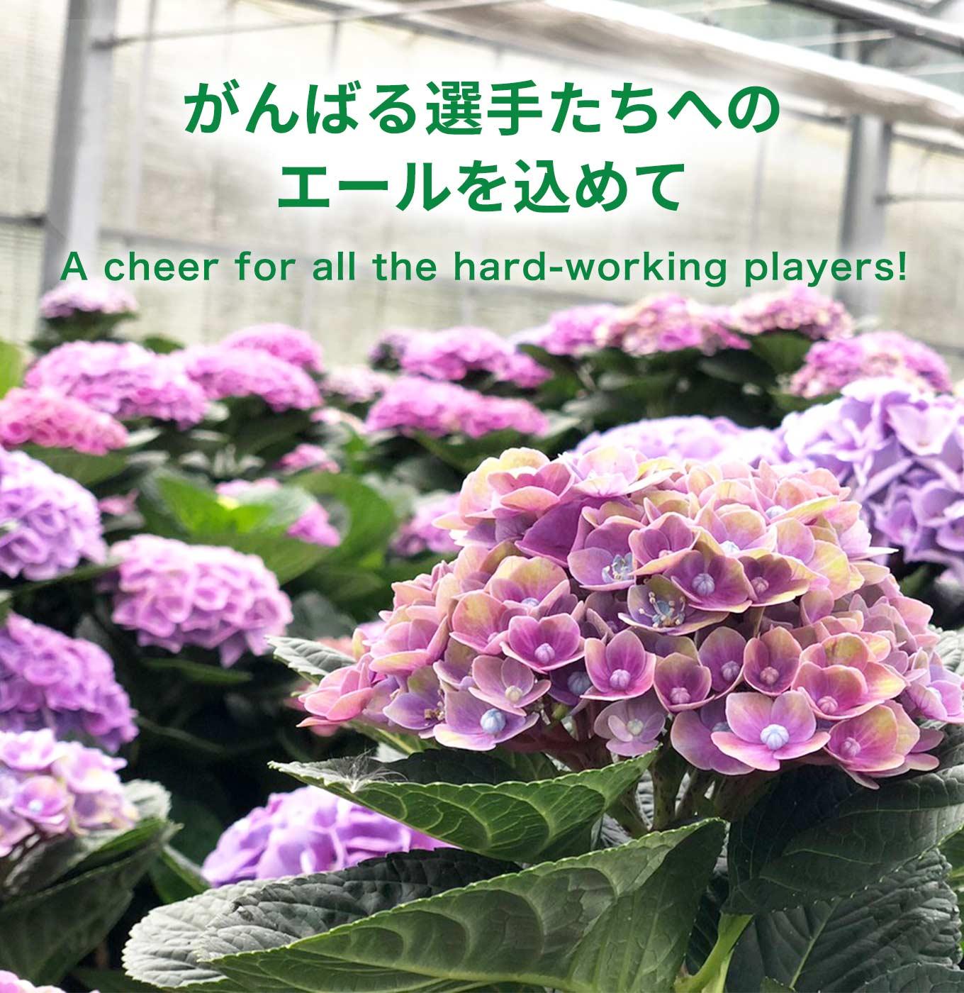 がんばる選手たちへのエールを込めて A cheer for all the hard-working players!